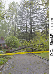 Weather Hazards - A neighborhood road is blocked by a large...