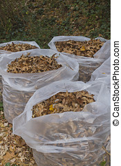 Bags of Autumn Oak Leaves