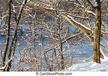 Winter Woods - The shores of lake Schlachtensee in Berlin,...
