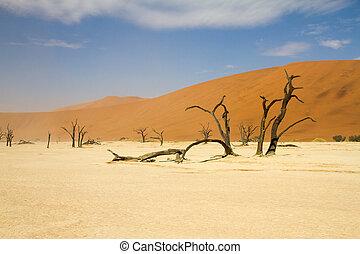 Sosssusvlei desert, Namibia - Dead trees in the Sossusvlei...