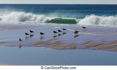 Flock of Seagulls Sitting on the Beach Ocean with Waves
