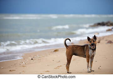 Dog at the beach - Cute friendly dog at the beach at rainy...
