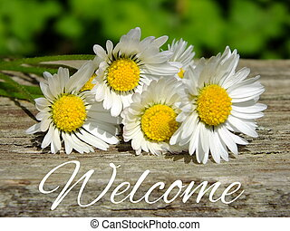 Welcome - Image of daisies with lettering welcome