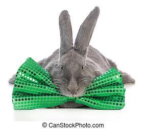 st patricks day bunny - giant flemish bunny wearing big...