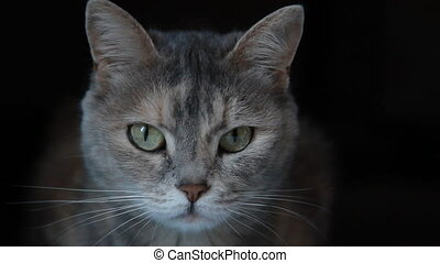 Grey cat on the black background