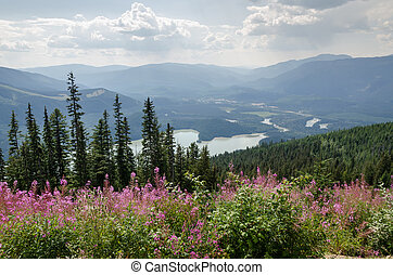 mountain with flowers in Canada