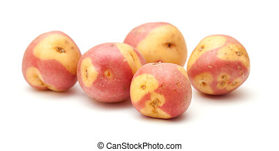 Canary islands potatoes, pink variety, isolated on whie...