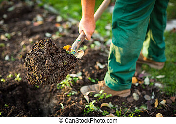 Gardening - man digging the garden soil with a spud shallow...