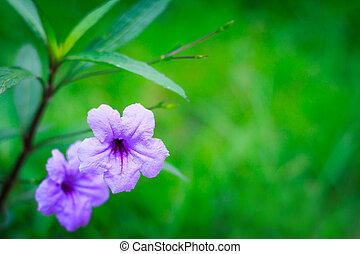 Bright purple flowers On a green background