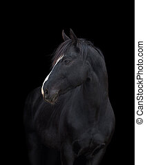 Black horse head on black background, isolated
