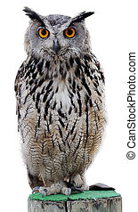 Rock Eagle-Owl - The Indian eagle-owl, also called the rock...
