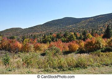 otoño, colores, en, nuevo, Hampshire,