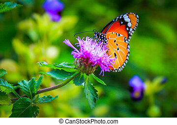 Butterfly colors found in nature. The beautiful colors are...