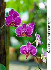 Malaysian Borneo orchid garden - Beautiful multi colored and...