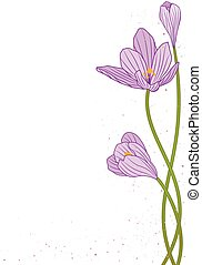 crocus - vector background with flowers of crocus