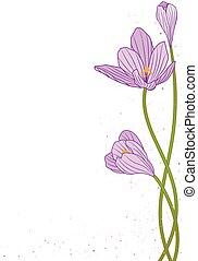 crocus - vector background with flowers of crocus