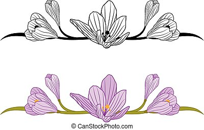 crocus set - vector set of borders with flowers of crocus