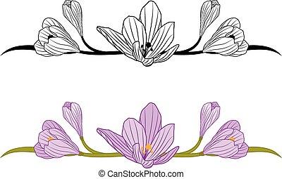 crocus set - vector set of borders with flowers of crocus