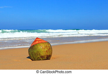 lone coconut on karon beach phuket thailand - lone coconut...
