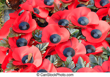 Poppy remembrance anzac day world war 1