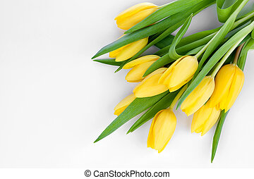 bouquet of fresh yellow tulips on white background with easy...