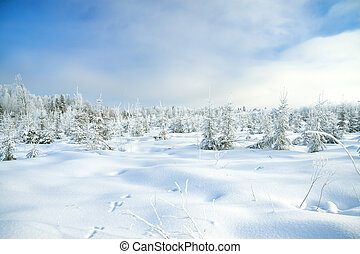 winter landscape with the forest and traces of a hare on...