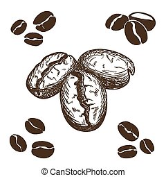 Coffee beans - Silhouette and hand drawn coffee beans.