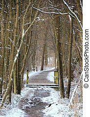 Snowy muddy forest path in cold winter