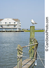 Seagull on a Piling