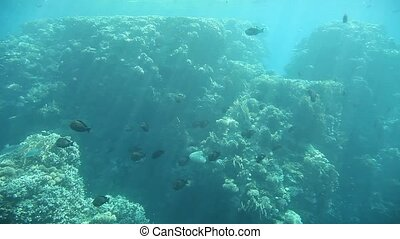Underwater life of Red Sea, Egypt - Underwater footage of...