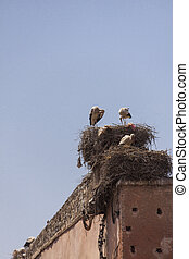 Storks nesting on a rooftop in Marrakesch - Storks,...