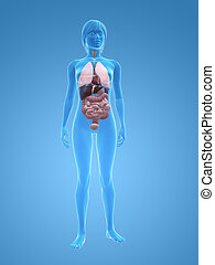 organs