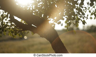 Light leak through the tree - Warm sunlight in the...