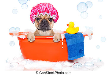 Dog taking a bath in a colorful bathtub with a plastic duck...