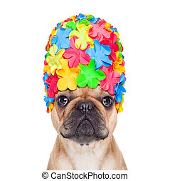 swimming cap dog - french bulldog dog wearing a bathing or...