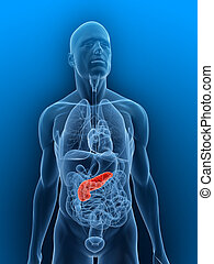 pancreas - 3d rendered illustration of a transparent body...