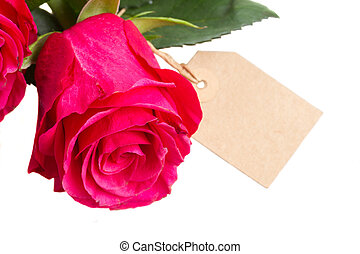 pink  rose flower with tag