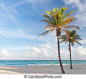 Palm trees at the beach in Miami Florida USA, on a beautiful summer day with blue sky and ocean in the background