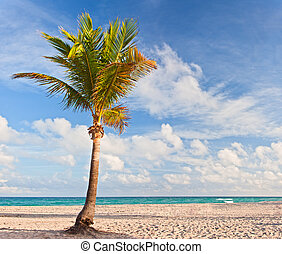Palm tree at the beach in Miami Florida USA, on a beautiful summer day with blue sky and ocean in the background