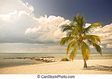 Key WEst, Florida Keys USA - Summer at a tropical paradise...