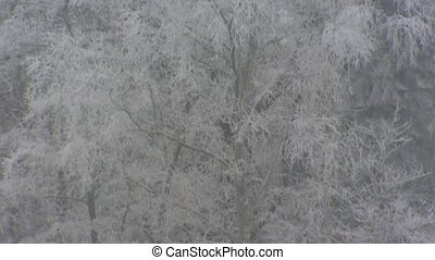 Deciduous tree, white frost - Severe winter - Deciduous tree...