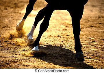 caballo, galopar, arena