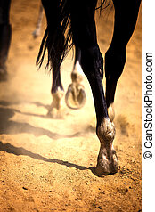 Cheval, jambes