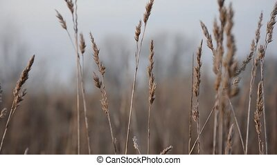 Movement on growing grass