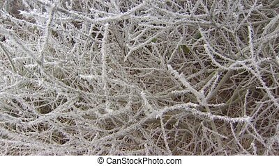 winter hoarfrost shrub tilt up - Severe winter - Shrub...