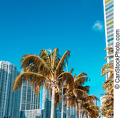 Palms and modern skyline of Miami on a beautiful sunny day.