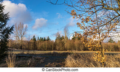 Rural landscape in fall colors