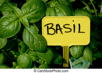 Basil - Nature, colors, flora, flowers, green, market, plant