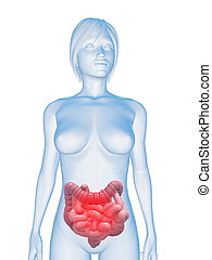 inflamed intestines - 3d rendered illustration of a human...
