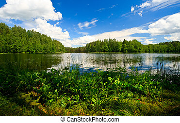 Forest lake - Summer day at remote forest lake